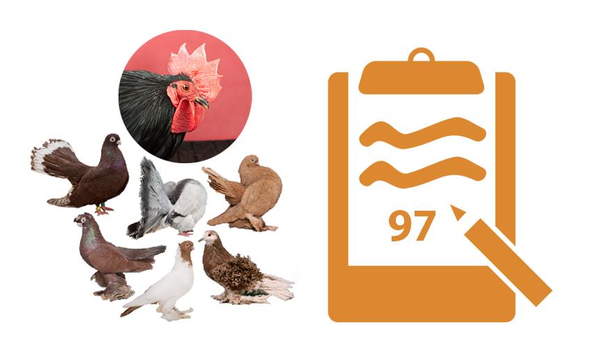 Kas yra vertinimo kortelės gyvūnų parodose?
