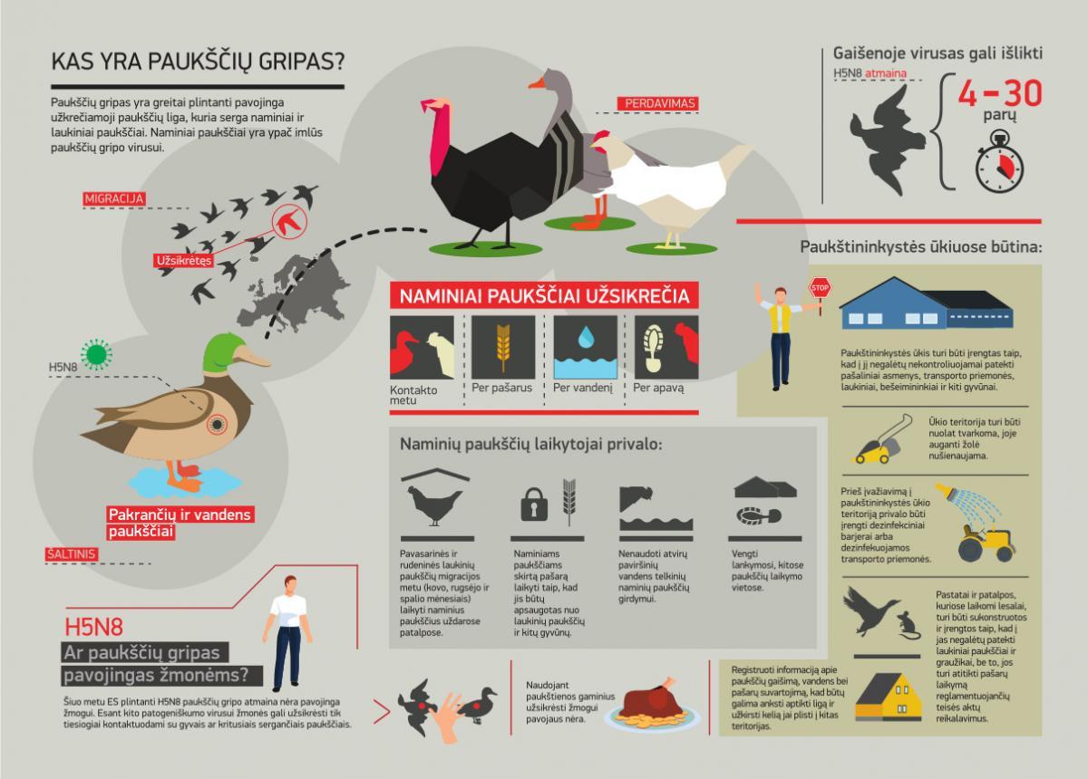 Apsisaugokime nuo paukščių gripo! Simptomai ir rekomendacijos